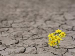 راهکار محققان دانشگاهی برای حل بحران بیآبی در کشور