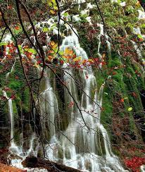 4 گوشه دنیا/ درخت آبشاری در مونته نگرو!