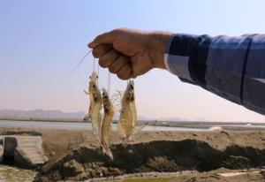 توسعه مواد دارویی و غذاهای فراسودمند از موجودات دریایی