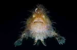موجودات دریایی عجیب که چهرههای ترسناکی دارند