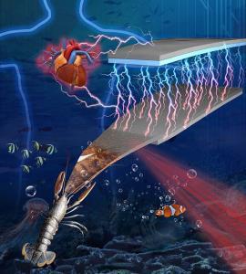 ساخت ابزارهای الکترونیکی با استفاده از پوسته موجودات دریایی