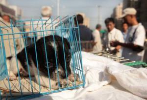 حیوانات خانگی زیر تیغ جراحی زیبایی؛ بوتاکس سگ و گربه ۱.۵ میلیون تومان