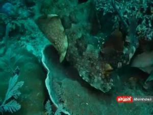 استتار دیدنی موجودات دریایی