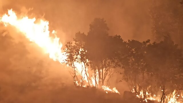 مهار ۲ آتش سوزي در جنگلها و مراتع بويراحمد