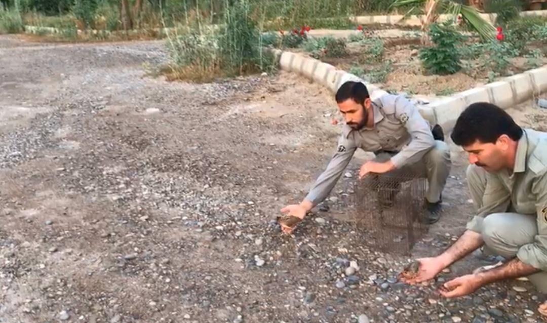 صیادان خارجی در پارک ملی دز دستگیر شدند