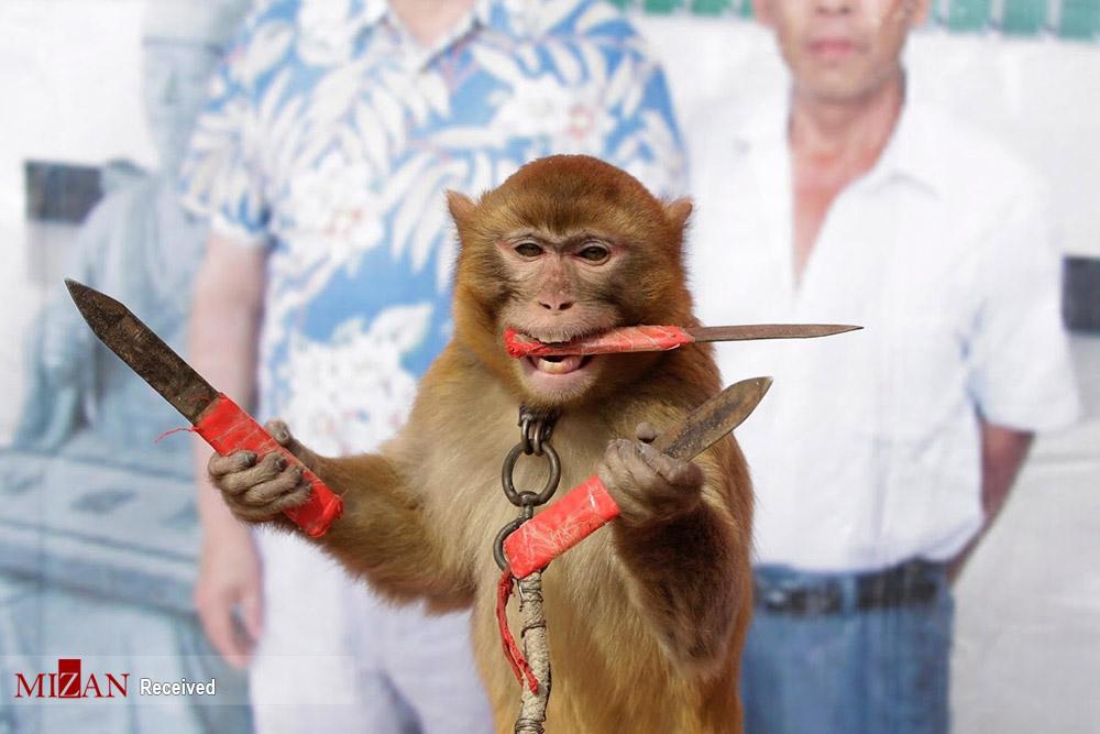 تجارت میمونها در چین