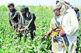قمار امریکا با تریاک افغانستان