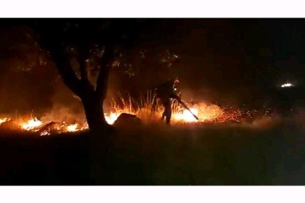 5 آتشسوزي در جنگلهاي کهگيلويه و بويراحمد مهار شد
