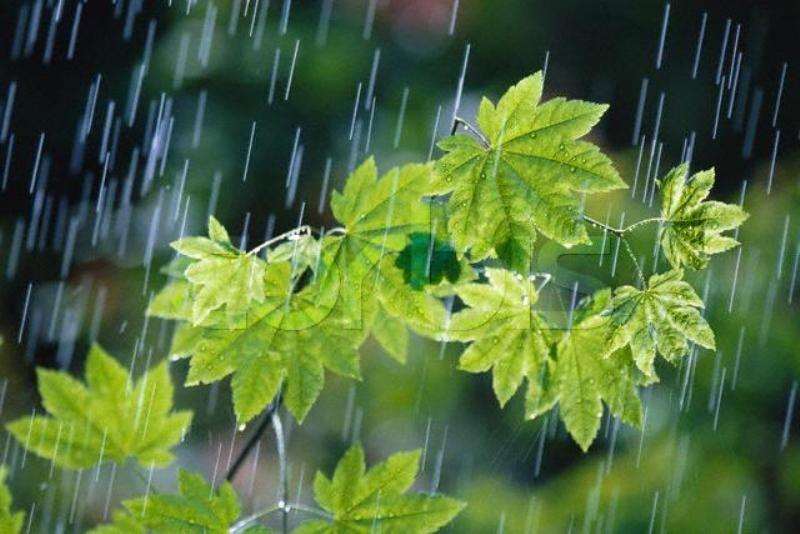 جنوب فارس بارانی میشود
