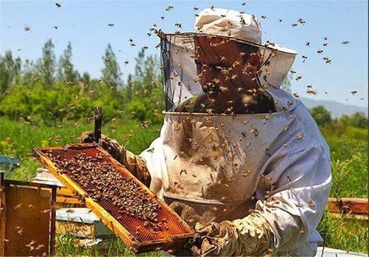 معجزه عسل و دارچین در درمان 20 بیماری!