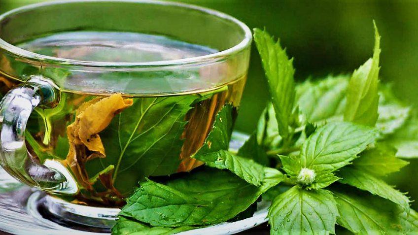 این گیاه سلامت شما را تضمین میکند