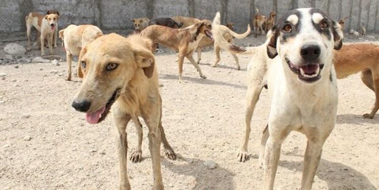 سگهای جدید در بندرعباس از روستاها میآیند؛ مردم تجمع سگها را به 137 اطلاع دهند