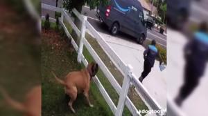 فرار دیدنی یک مرد از دست سگ خانگی