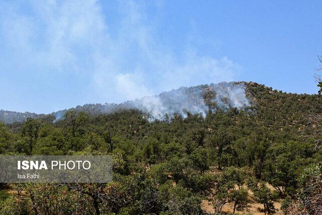 آتش سوزی گسترده در جنگلهای ارتفاعات درشک بویراحمد