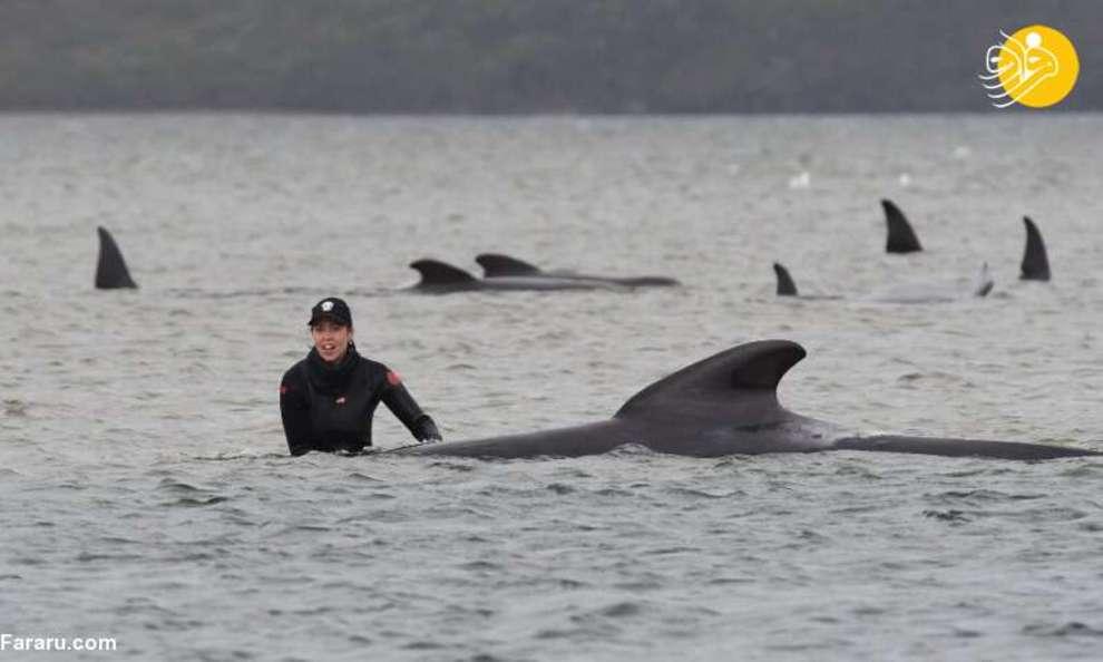 عملیاتِ نجاتِ ۱۸۰ نهنگ