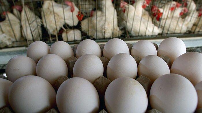 گرانی اخیر مرغ و تخم مرغ؛ راهکار چیست؟