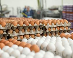 کشف انبار احتکار تخممرغ در زنجان