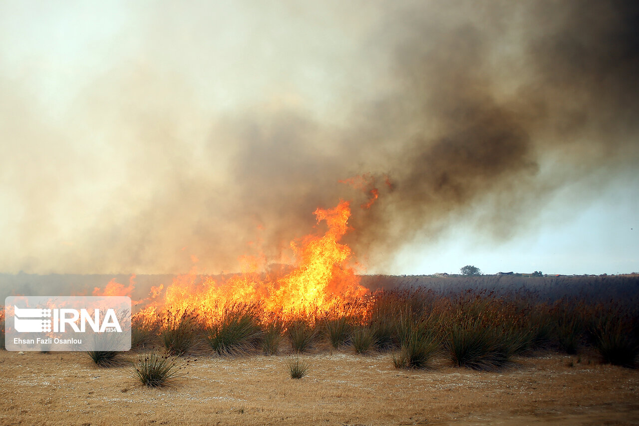 آتش انسانی دوباره به جان تالاب میانکاله افتاد