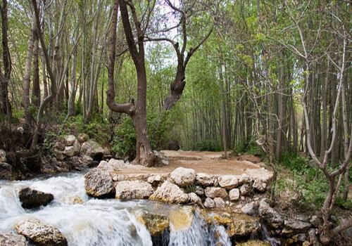 پارکهای جنگلی چهارمحال و بختیاری به بخش غیردولتی واگذار میشود