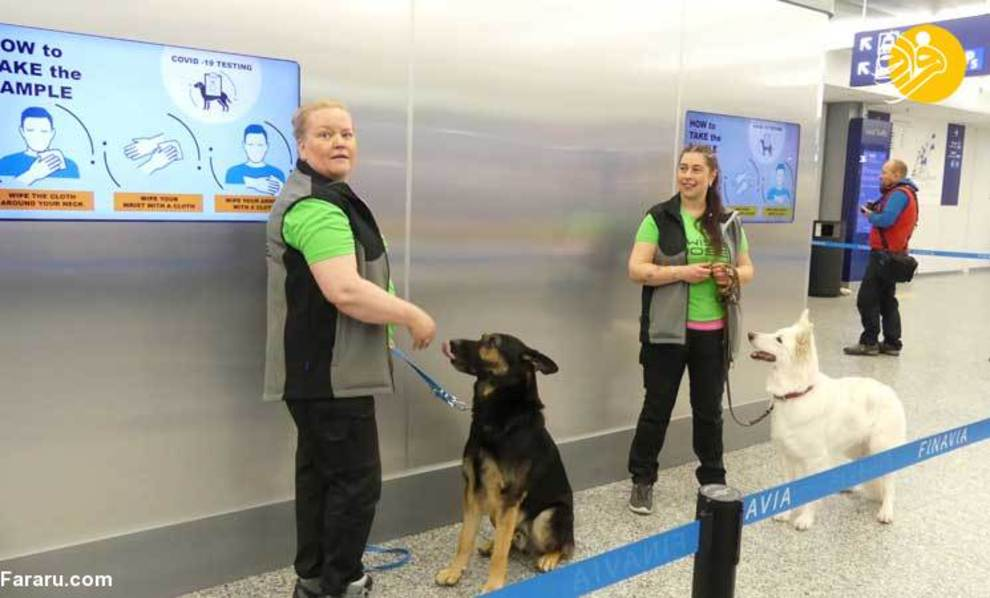 استفاده از سگهای کرونایاب در فرودگاه هلسینکی