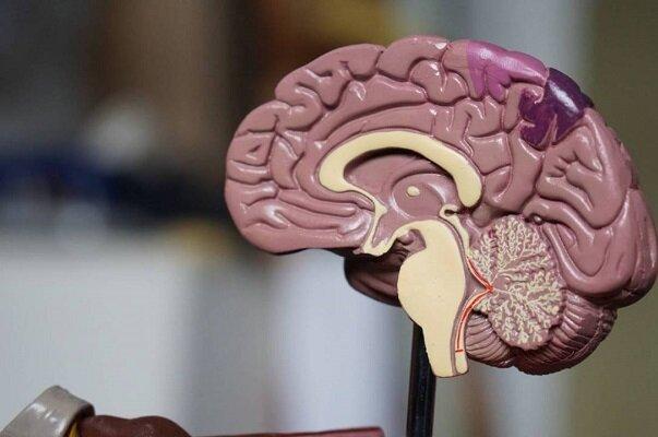 شناسايي پروتئين عامل کاهش استرس و افسردگي در مغز