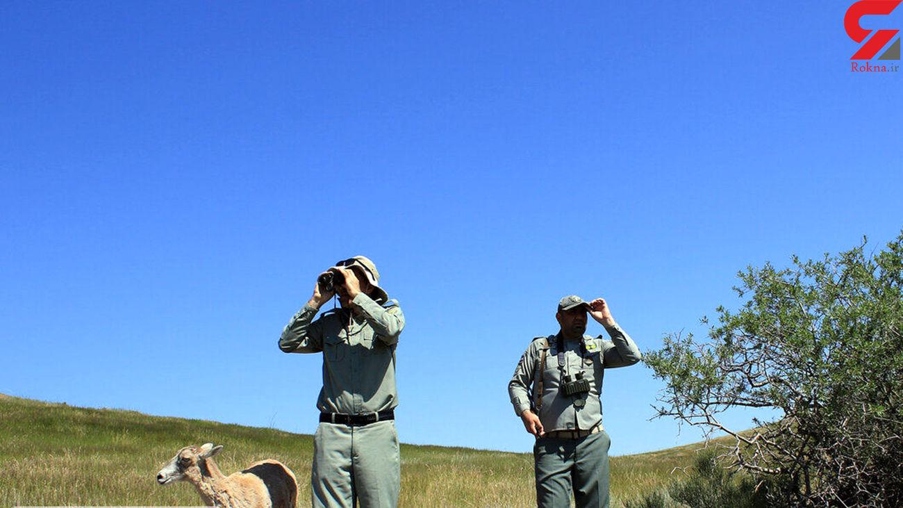 شناسایی متخلفان شکار و صید در مازندران ادامه دارد