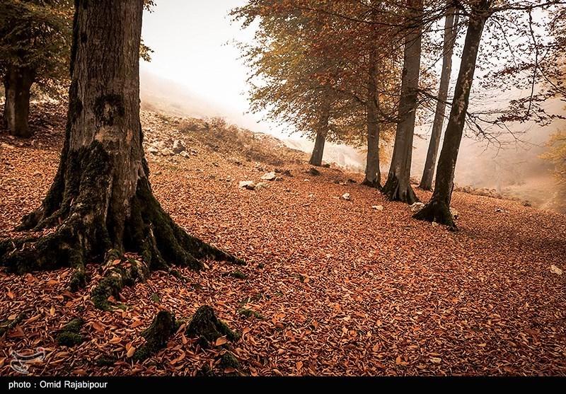 طبیعت رنگارنگ پاییزی روستای اشکورات گیلان