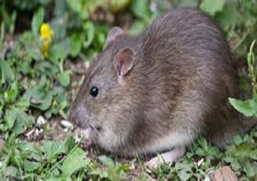 هجوم موشها به مزارع هرمزگان