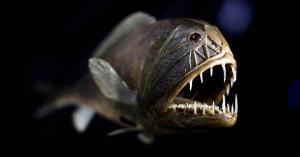 وحشتناک ترین موجودات دریایی؛ نزدیک شدن به این ماهی ها جرات میخواهد!