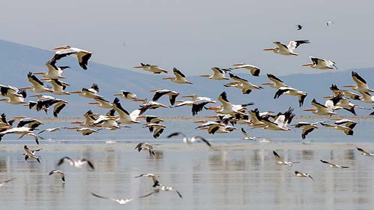 آواز پرندگان مهاجر در تالابهای مازندران طنین انداز شد