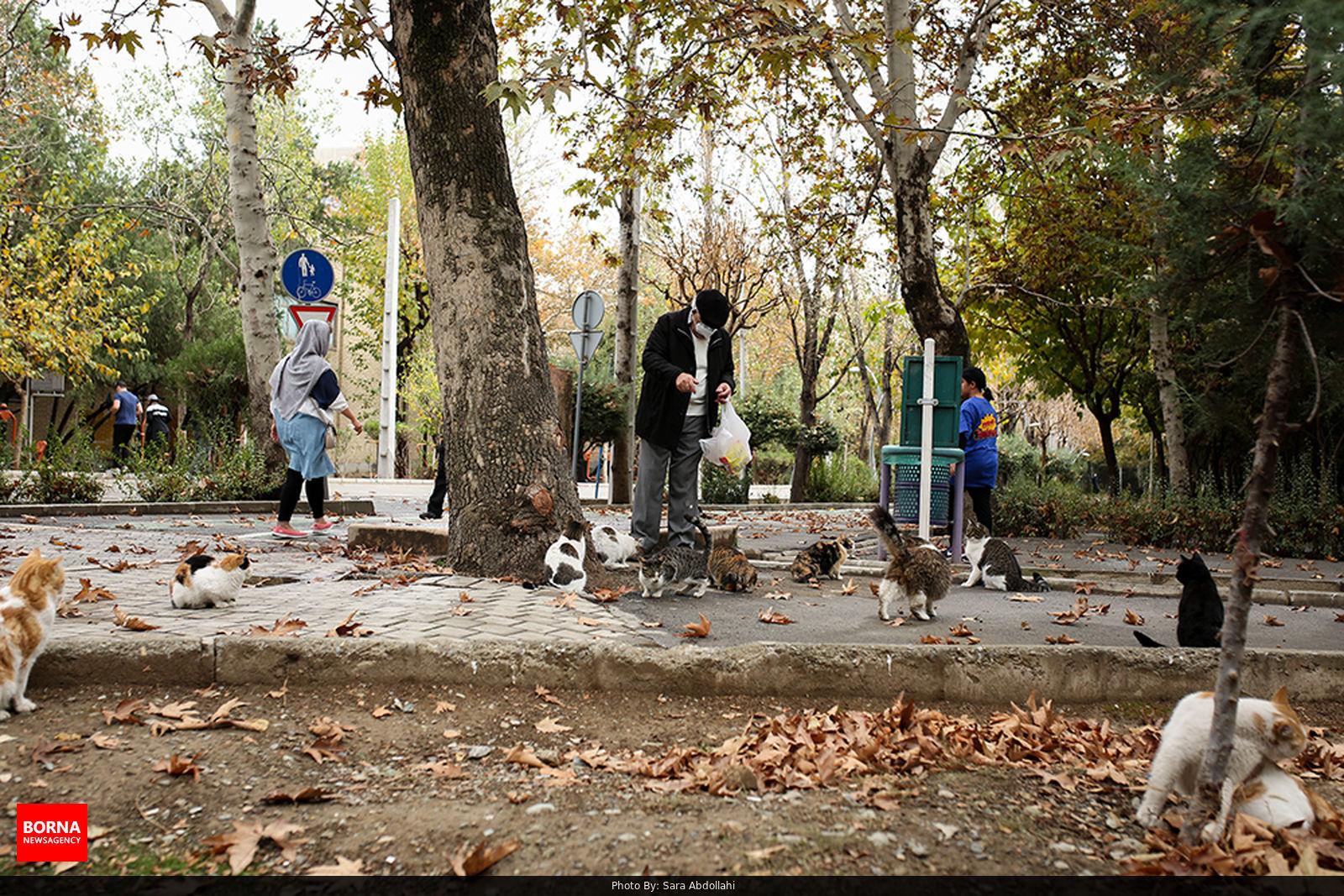 حال و هوای تهران بارانی و گربه های گرسنه در پارک لاله
