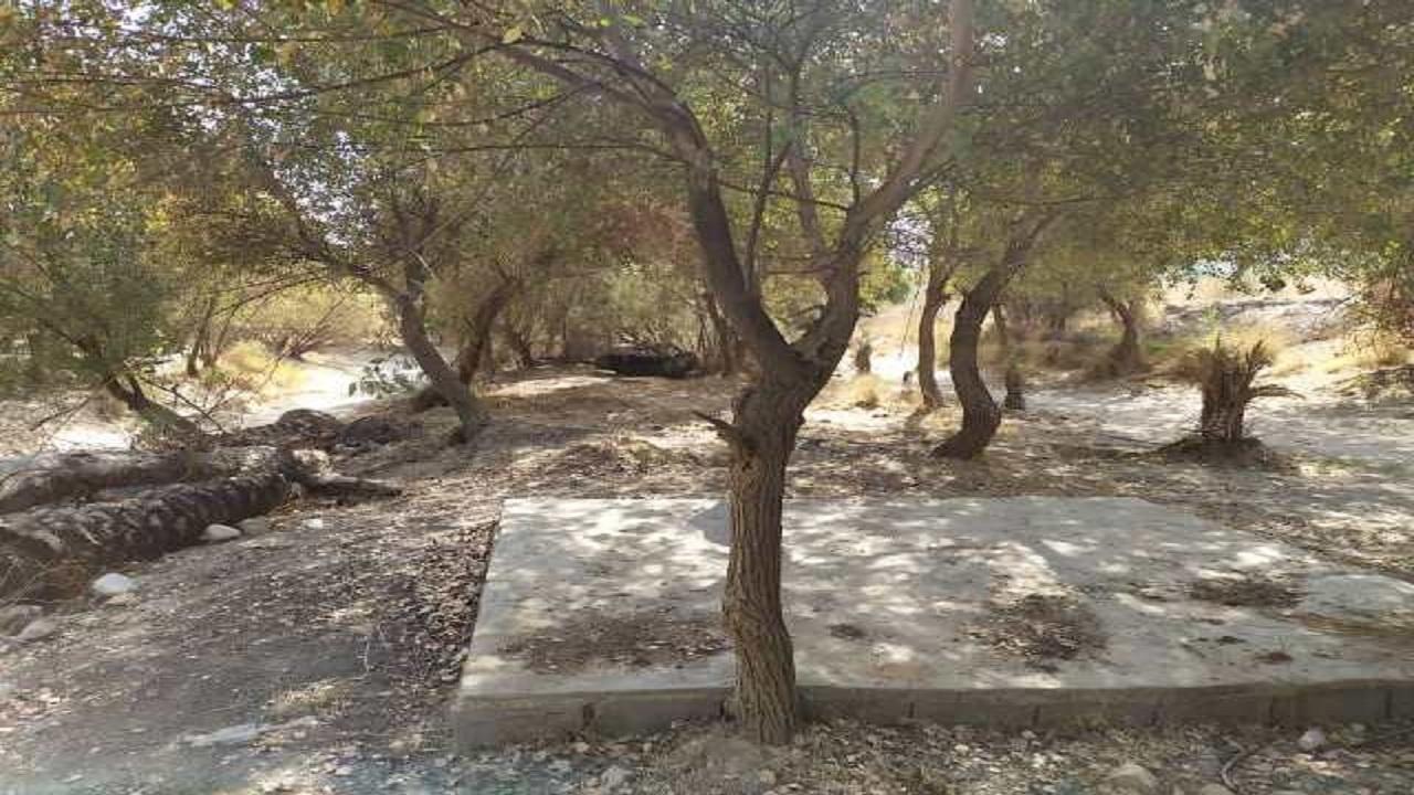 جلوگیری از تخریب و تصرف جنگل گلوبردکان جم