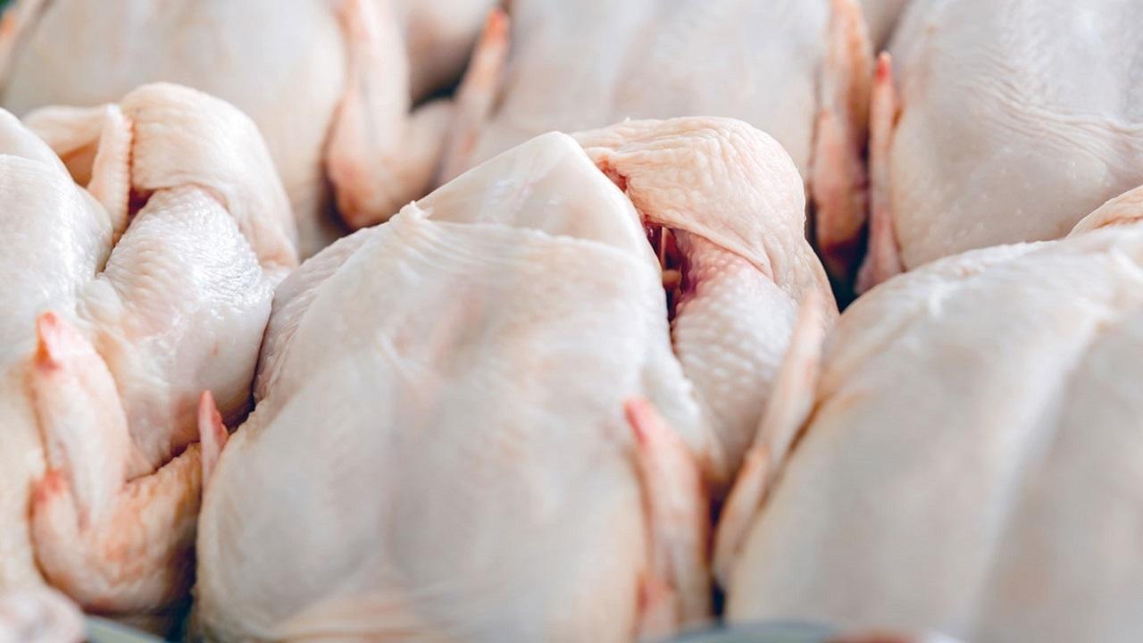 توزیع مرغ منجمد در آذربایجانشرقی