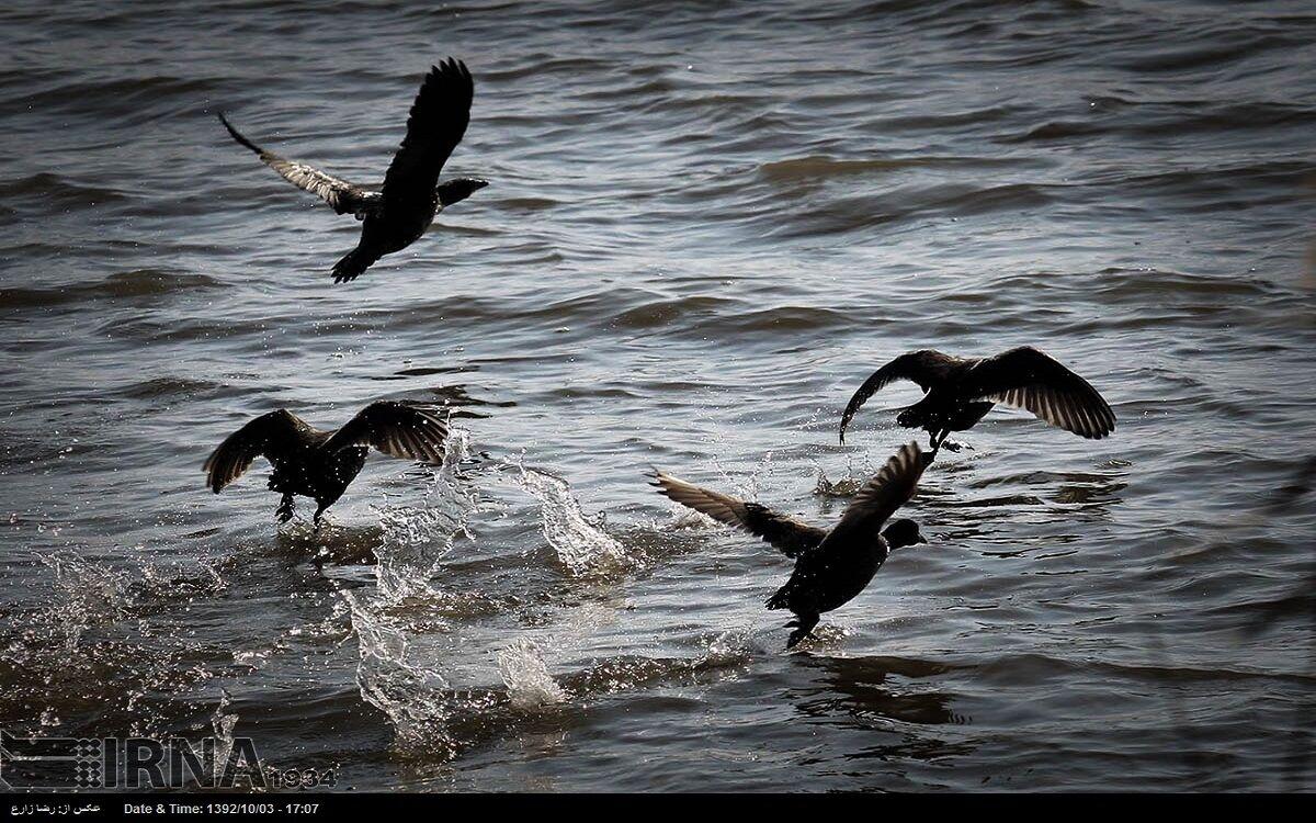 تلفاتی از پرندگان مهاجر در حاشیه رود ارس مشاهده نشده است