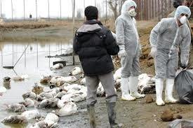آنفلوآنزای فوق حاد پرندگان در دو استان