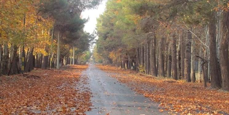 توضیحات شهرداری محمد شهر در مورد قطع درختان دشت بهشت
