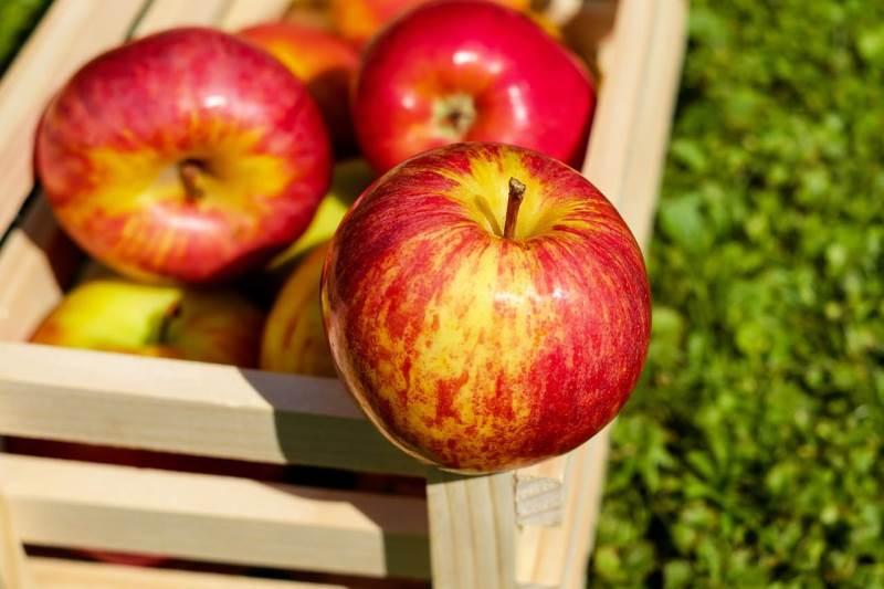بلاتکلیفی ۸۰۰ هزار تن سیب در سردخانهها آذربایجانغربی