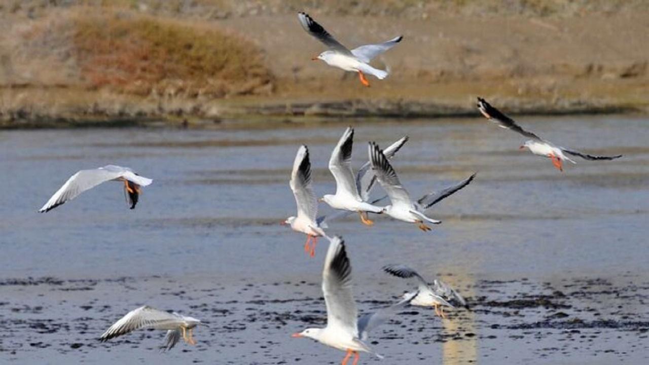 آیا بیماری آنفلوانزا فوق حاد پرندگان قابلیت سرایت به انسان را دارد؟
