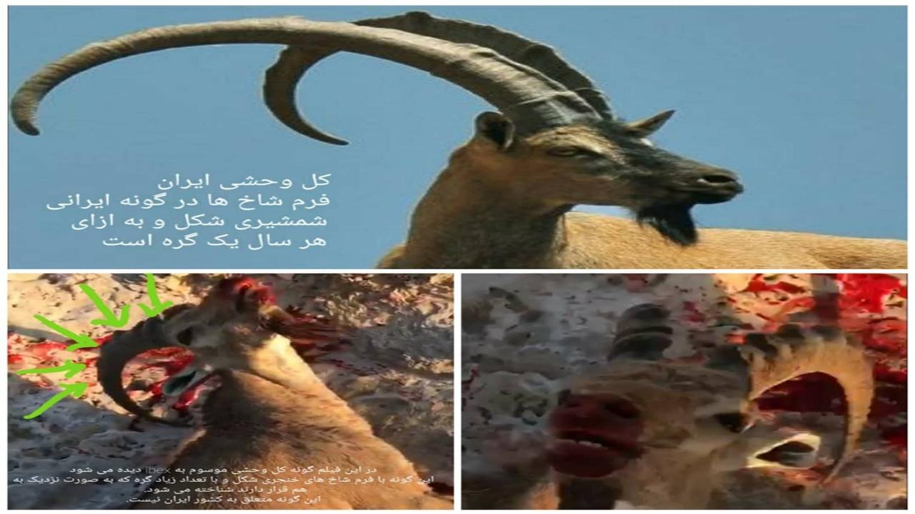 تکذیب حضور شکارچیان خارجی در پارک ملی خبر