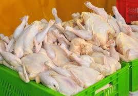 قیمت مرغ در اردبیل کاهش یافت