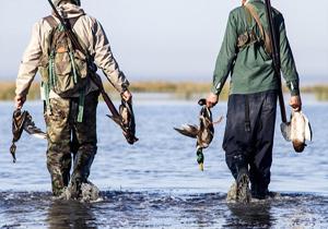 ممنوعیت شکار پرندگان زمستان گذران در مازندران