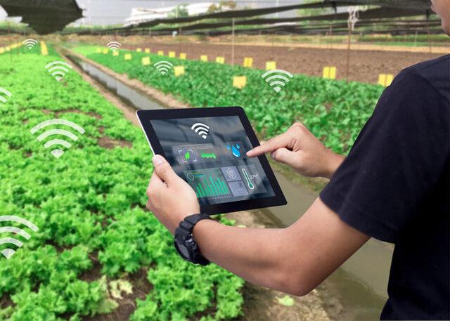 چرا استفاده از اینترنت اشیاء در کشاورزی مهم است؟