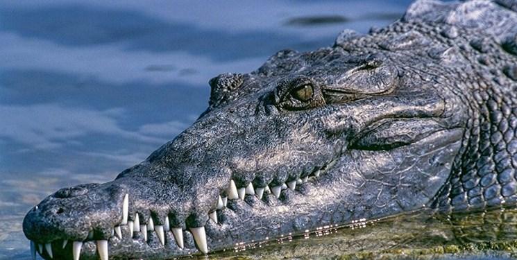 پرونده تمساح دریاچه چیتگر بسته شد
