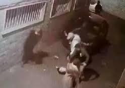 جزئیات حمله سارقان زورگیر به ۲ زن تهرانی