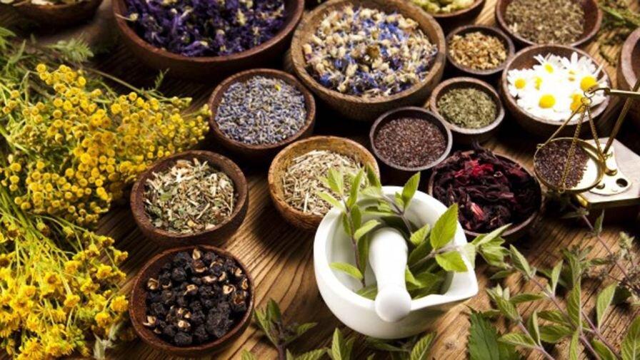 ۶ گیاه دارویی که میتوانید در آپارتمان پرورش دهید