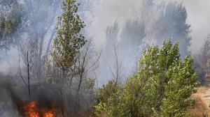 اطفای آتش در جنگل کبودوال علی آباد کتول