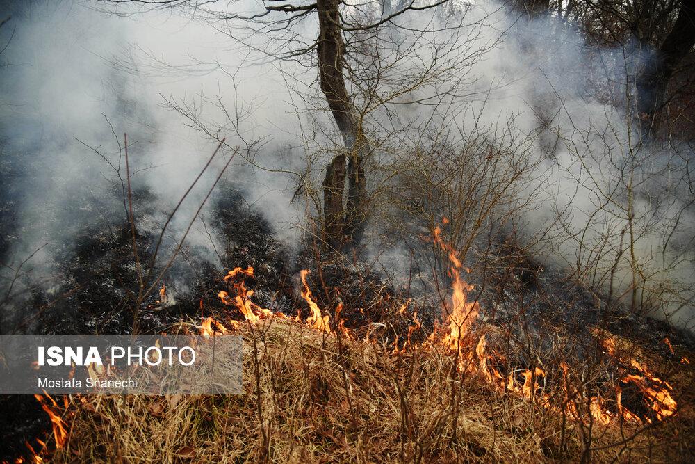 عکس/ ۵ هکتار از اراضی جنگلی شهرستان نکا در آتش سوخت