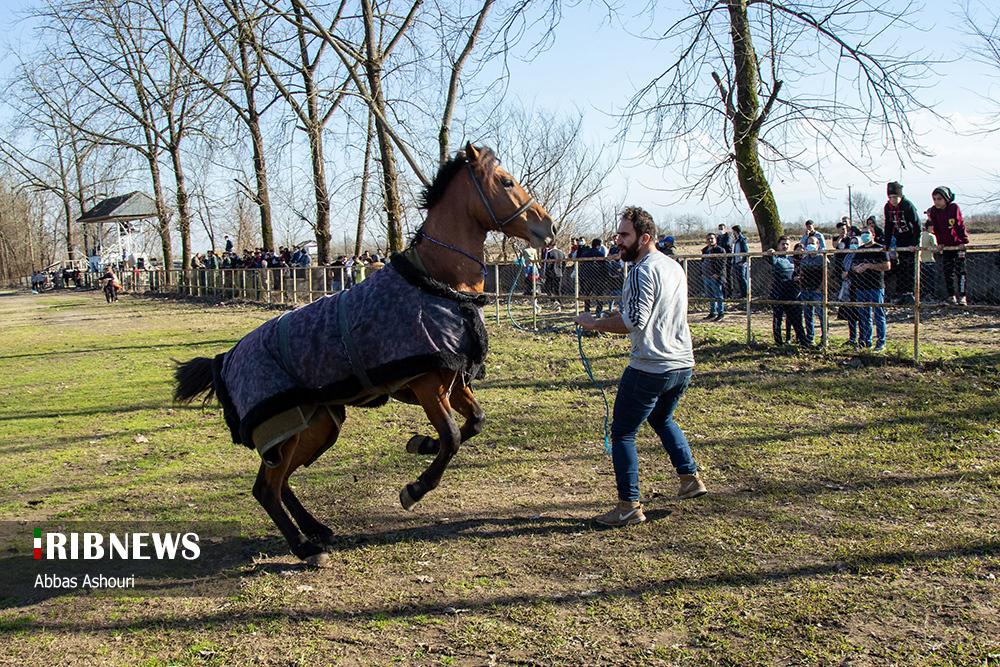 اسب های چموش در مسابقه کورس اسبدوانی «پیربازار» رشت