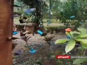 باغ پروانه در نزدیکی شهر پاتایا تایلند