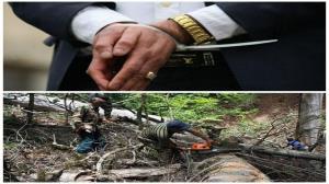 دستگیری مدیر سابق منابع طبیعی سوادکوه